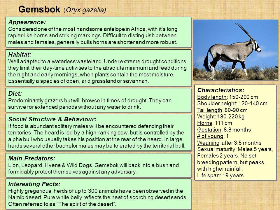 Gemsbok (Oryx gazella) Habitat: Well adapted to a waterless wasteland.