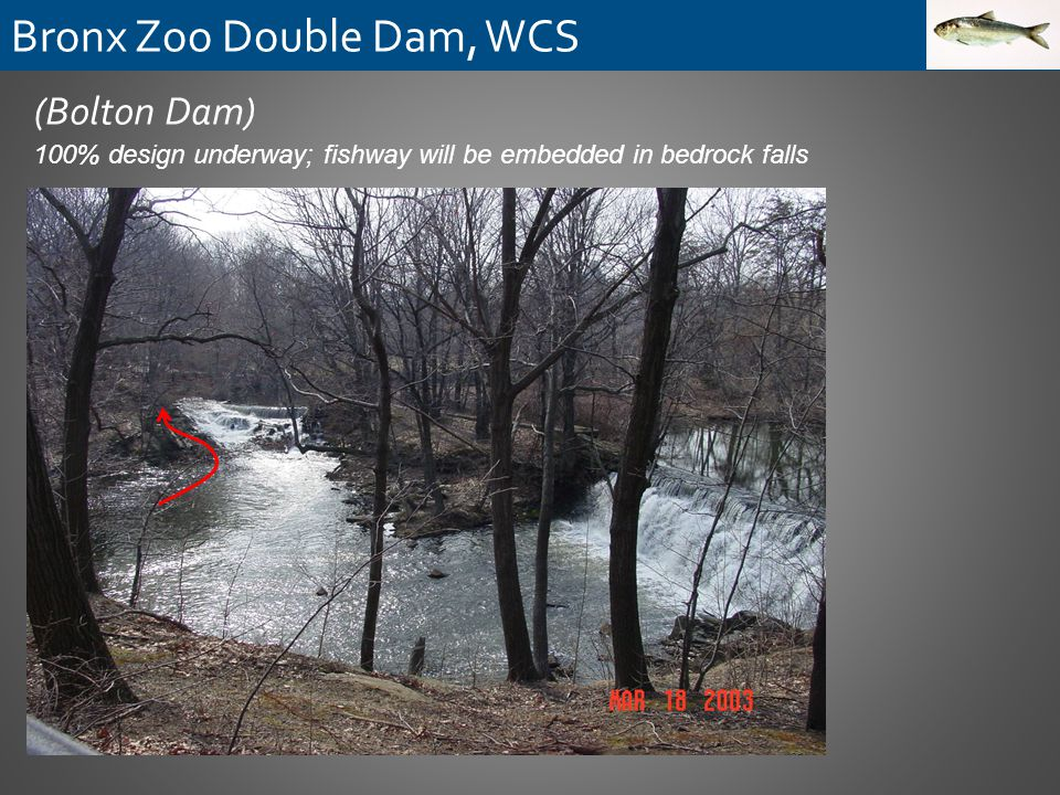 (Bolton Dam) 100% design underway; fishway will be embedded in bedrock falls Bronx Zoo Double Dam, WCS