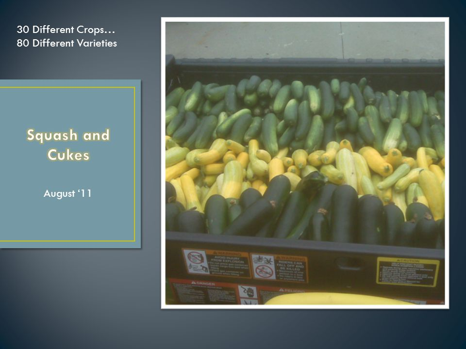 Grow Produce Sell on Campus Gather Scraps Compost Scraps Apply Compost to Fields