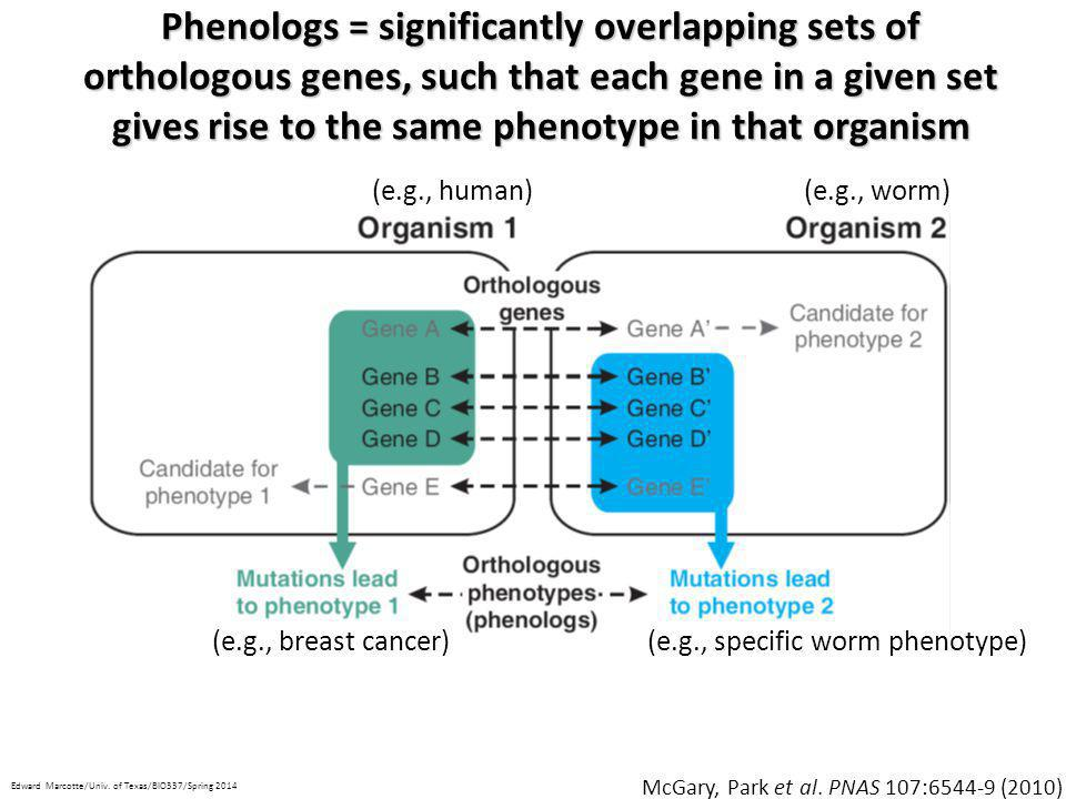 An example phenolog: a high incidence of male C.
