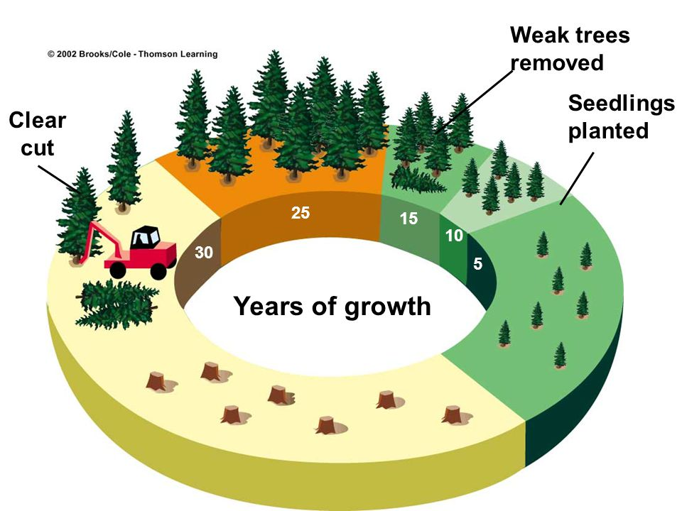 C. TYPES OF FOREST MANAGEMENT - The total volume of wood produced by a strand of forest VARIES as it goes through different STAGES of growth and succe