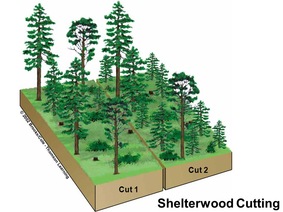 2. Shelterwood Cutting: -Removes all mature trees in two / three cuttings over a period of 10 years. -allows natural regeneration -reduces soil erosio