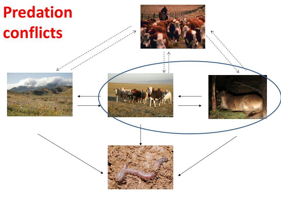 Wikipedia Predation conflicts John Sandy Erica Spotswood Bryan Voelker