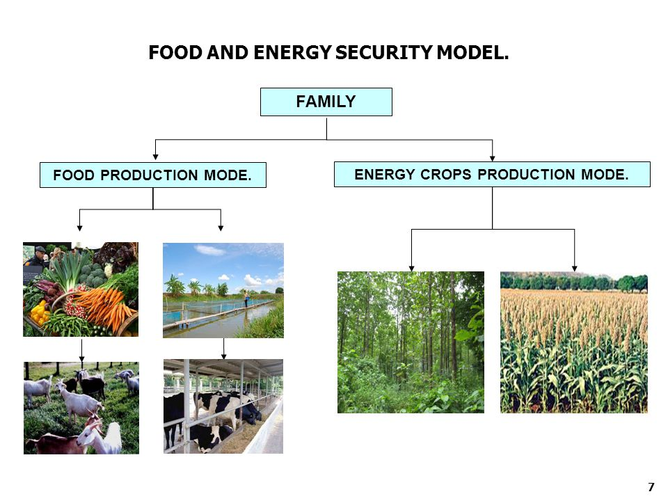 FOOD AND ENERGY SECURITY MODEL. FAMILY FOOD PRODUCTION MODE. ENERGY CROPS PRODUCTION MODE. 7