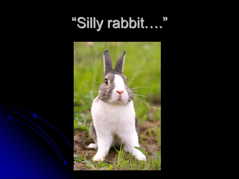Silly rabbit….