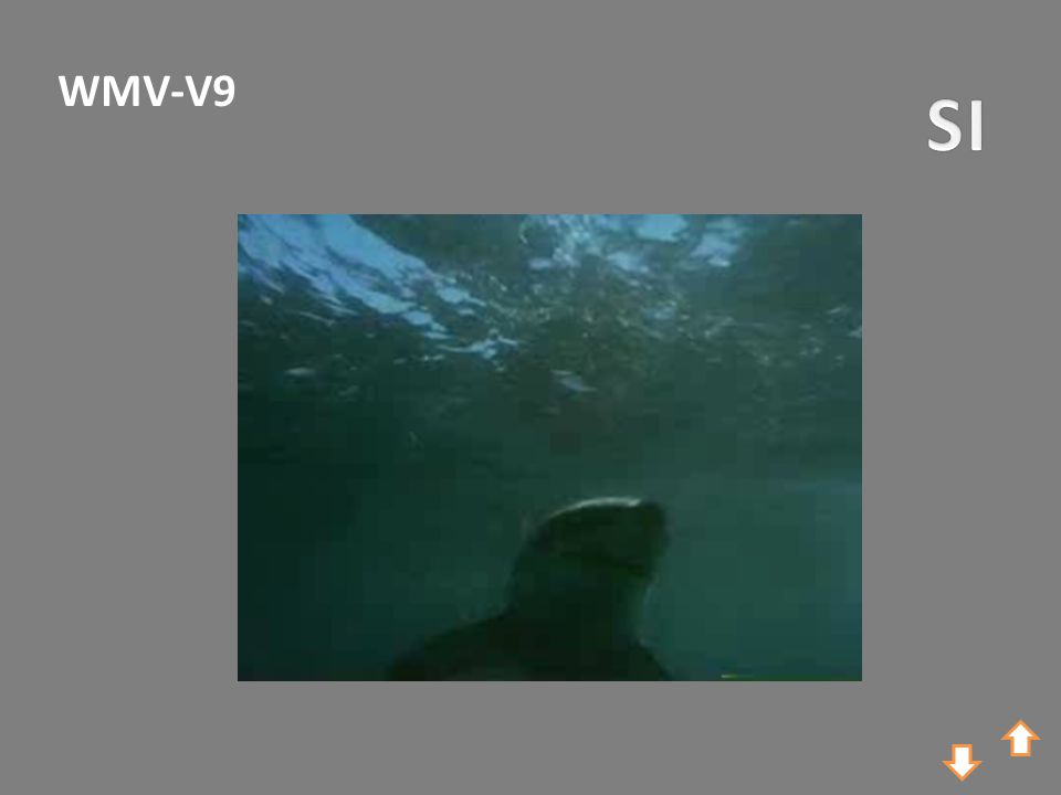 WMV-V9