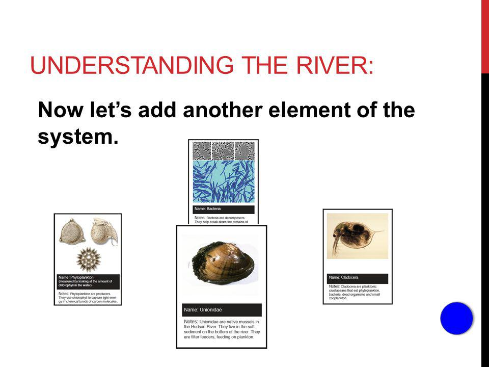UNDERSTANDING THE RIVER: Now lets add another element of the system.