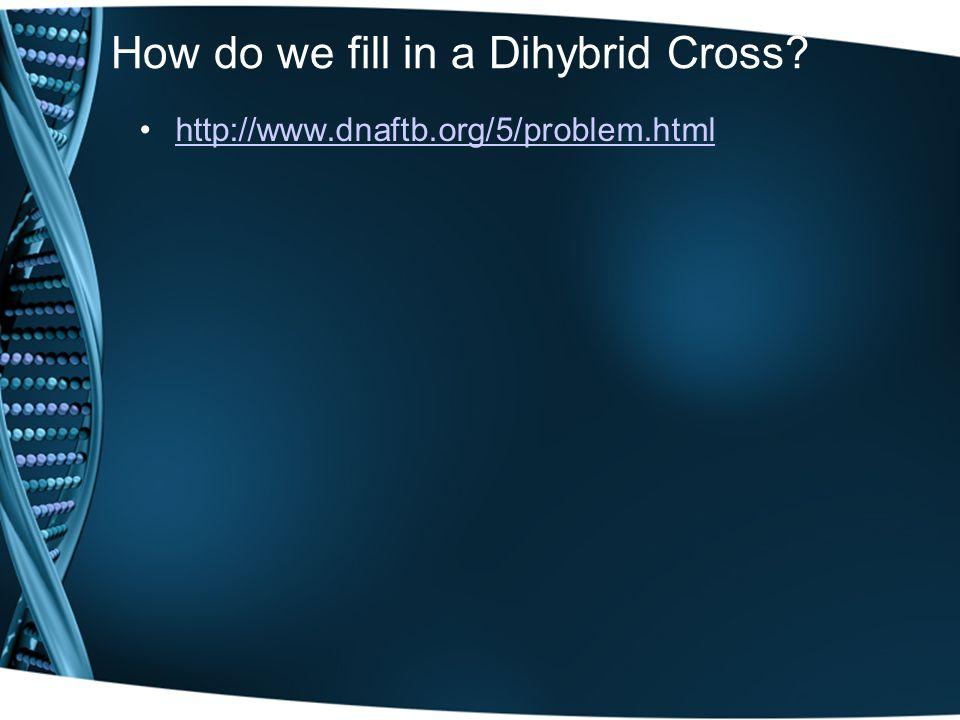 How do we fill in a Dihybrid Cross? http://www.dnaftb.org/5/problem.html