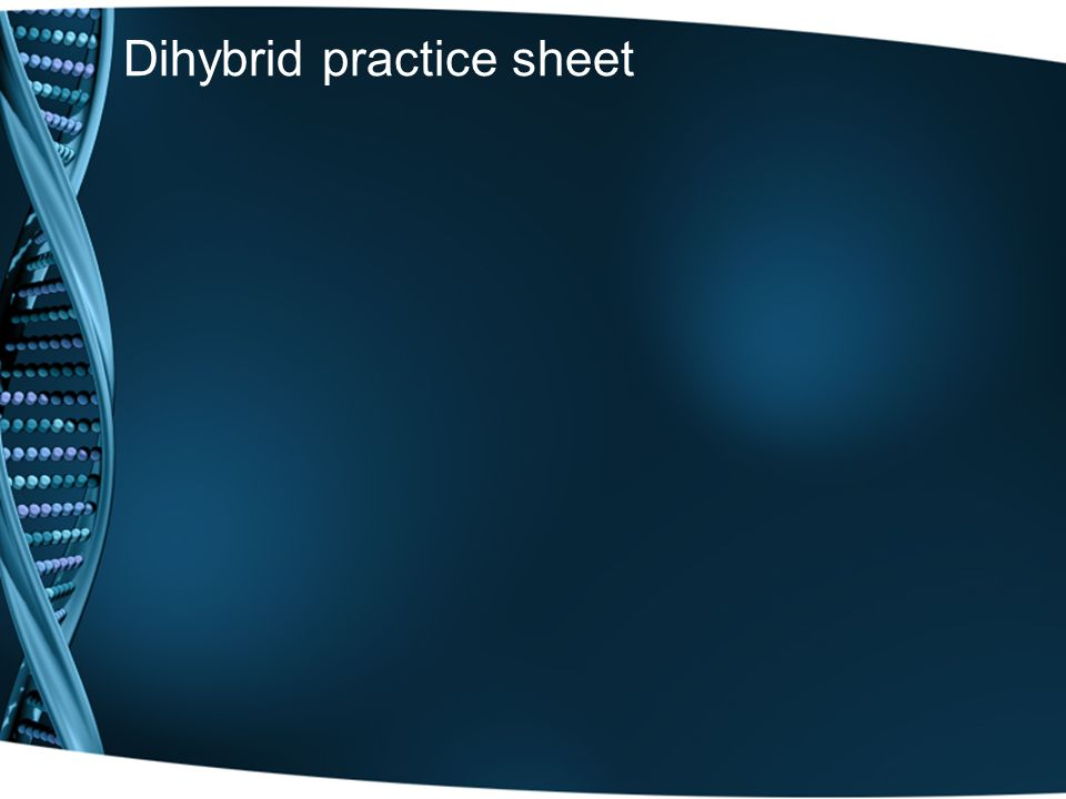 Dihybrid practice sheet