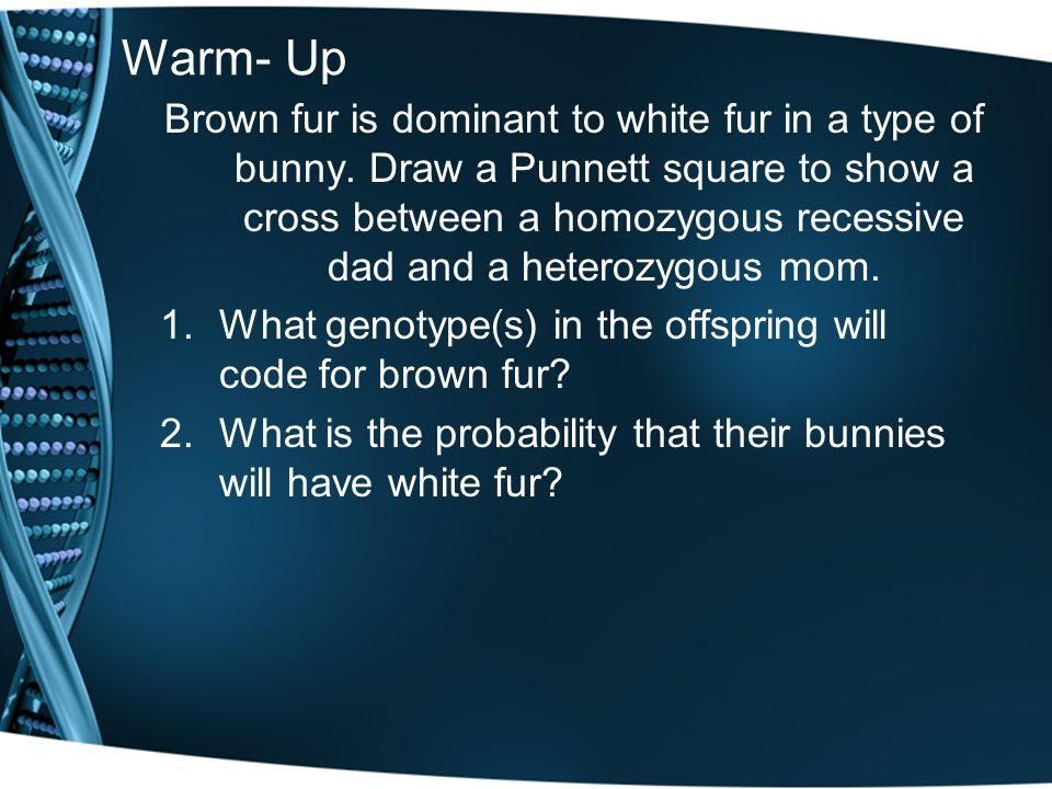 Warm- Up Brown fur is dominant to white fur in a type of bunny. Draw a Punnett square to show a cross between a homozygous recessive dad and a heteroz