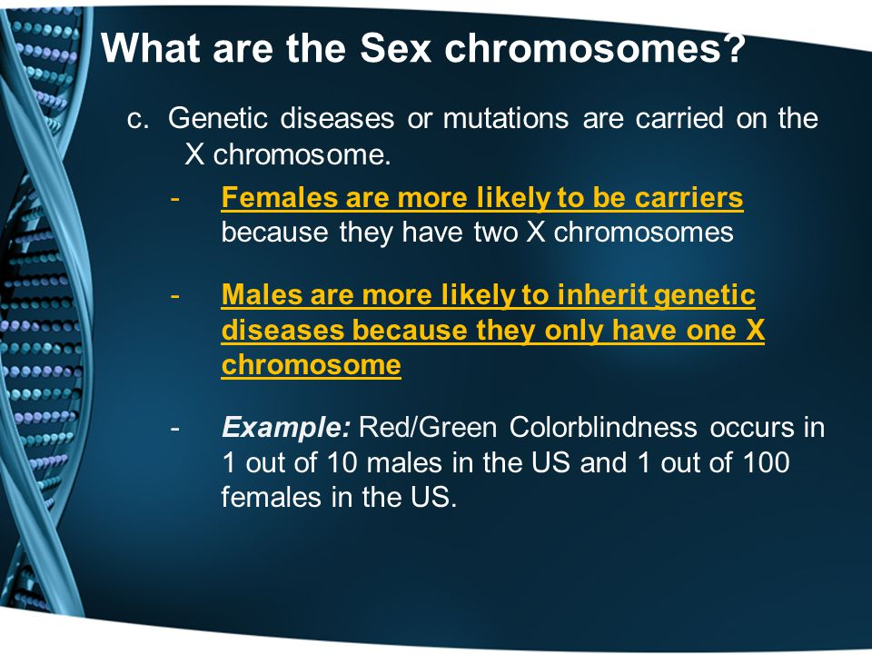 c. Genetic diseases or mutations are carried on the X chromosome. -Females are more likely to be carriers because they have two X chromosomes -Males a