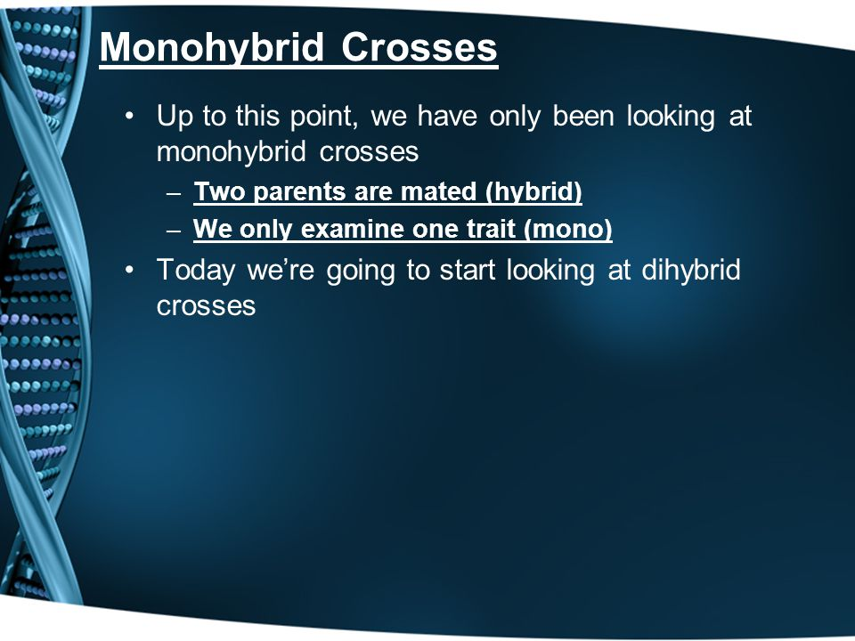 Monohybrid Crosses Up to this point, we have only been looking at monohybrid crosses –Two parents are mated (hybrid) –We only examine one trait (mono)
