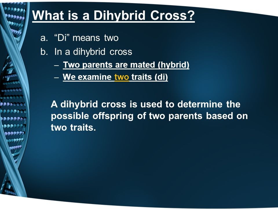 What is a Dihybrid Cross? a.Di means two b.In a dihybrid cross –Two parents are mated (hybrid) –We examine two traits (di) A dihybrid cross is used to