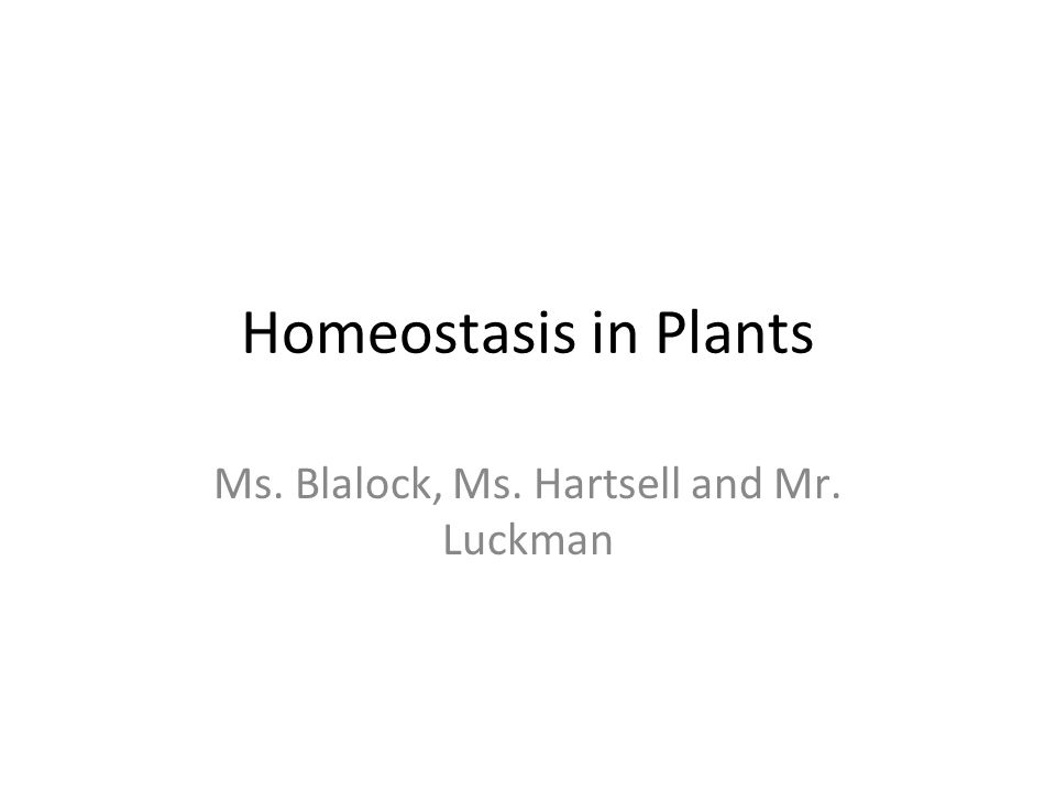 Homeostasis in Plants Ms. Blalock, Ms. Hartsell and Mr. Luckman