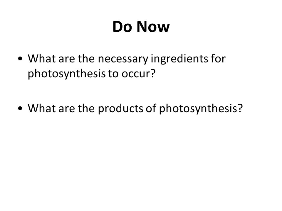 Do Now What are the necessary ingredients for photosynthesis to occur? What are the products of photosynthesis?