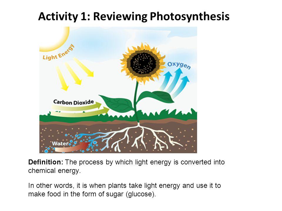 Closing: Homeostasis in Plants vs.