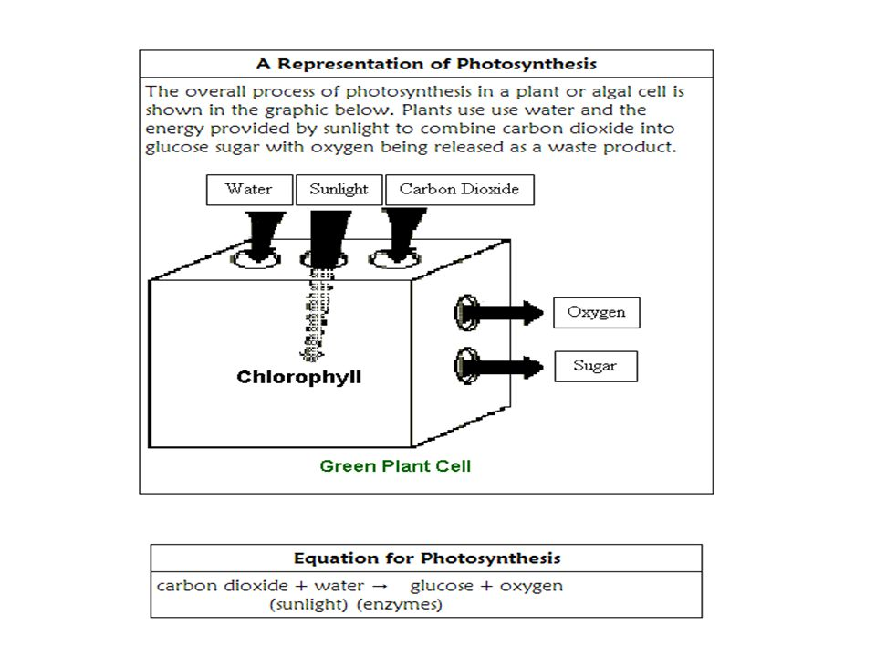 Activity 2: Lab Homeostasis in Plants Directions: Read Page 1 of the lab on Homeostasis in Plants.