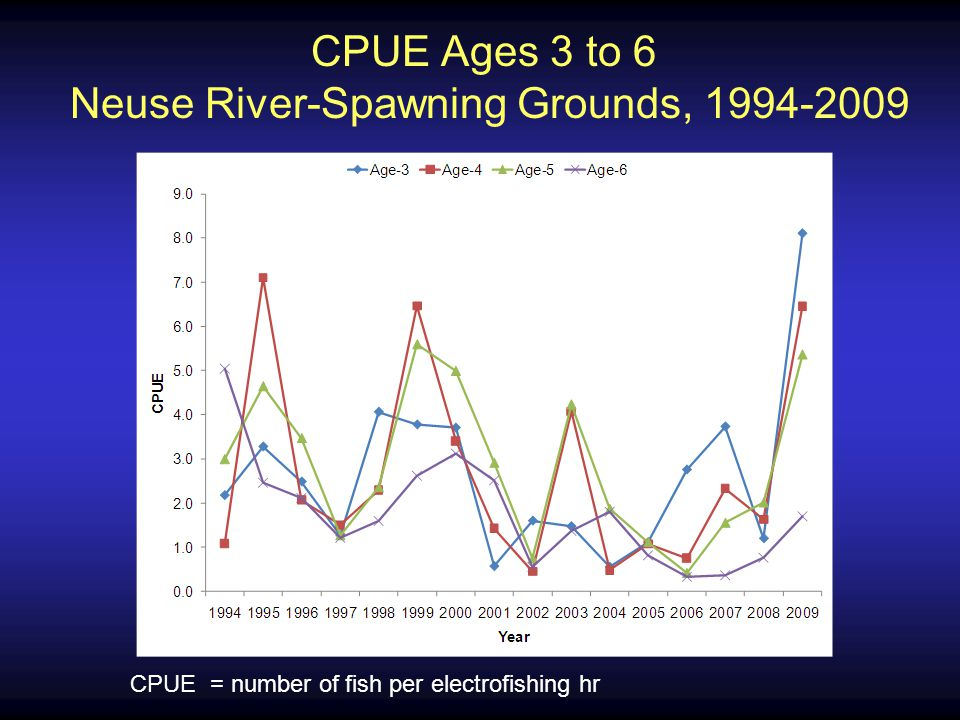CPUE Ages 3 to 6 Neuse River-Program 915, 2003-2009 CPUE = number of fish in 160 gill net sets