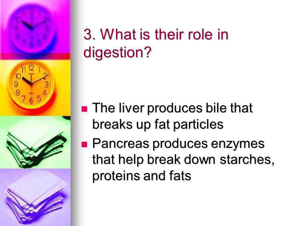 3.What is their role in digestion.