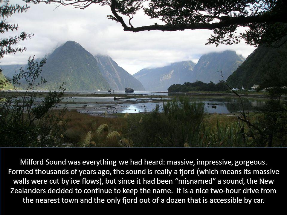 Milford Sound was everything we had heard: massive, impressive, gorgeous.