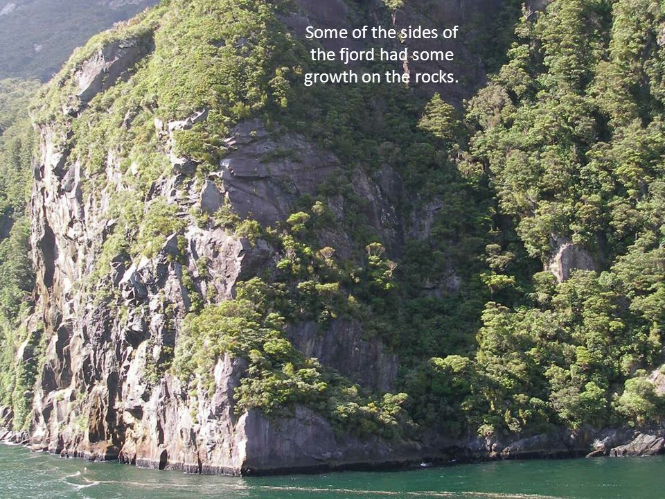 Some of the sides of the fjord had some growth on the rocks.