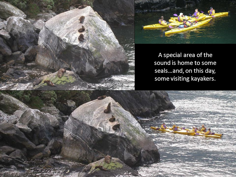 A special area of the sound is home to some seals…and, on this day, some visiting kayakers.