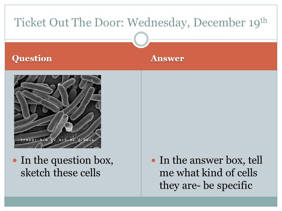Question Answer Prokaryotes- they do not have a nucleus Bacteria Ticket Out The Door: Wednesday, Dec 19 th