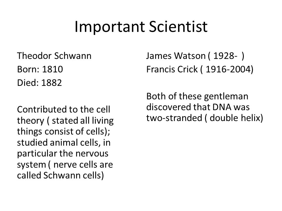 Important Scientist Theodor Schwann Born: 1810 Died: 1882 Contributed to the cell theory ( stated all living things consist of cells); studied animal cells, in particular the nervous system ( nerve cells are called Schwann cells) James Watson ( 1928- ) Francis Crick ( 1916-2004) Both of these gentleman discovered that DNA was two-stranded ( double helix)