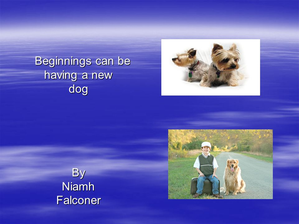 Beginnings can be Beginnings can be having a new dogByNiamhFalconer
