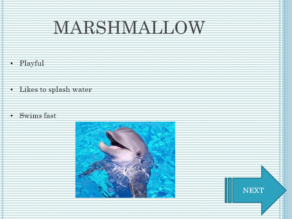 C LICK A DOLPHIN TO BEGIN Marshmallow Peaches