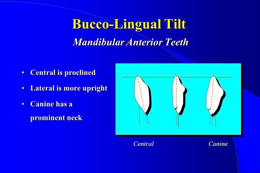 Bucco-Lingual Tilt Mandibular Anterior Teeth Central is proclinedCentral is proclined Lateral is more uprightLateral is more upright Canine has a prominent neckCanine has a prominent neck CentralCanine