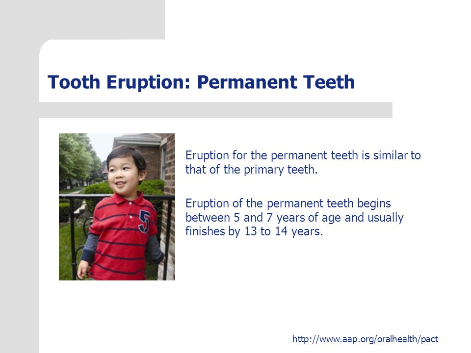 http://www.aap.org/oralhealth/pact Question #3 You are seeing a 15-month-old healthy boy for his 15-month routine visit.