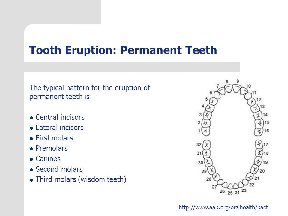 http://www.aap.org/oralhealth/pact Answer You are seeing a 15-month-old healthy boy for his 15-month routine visit.
