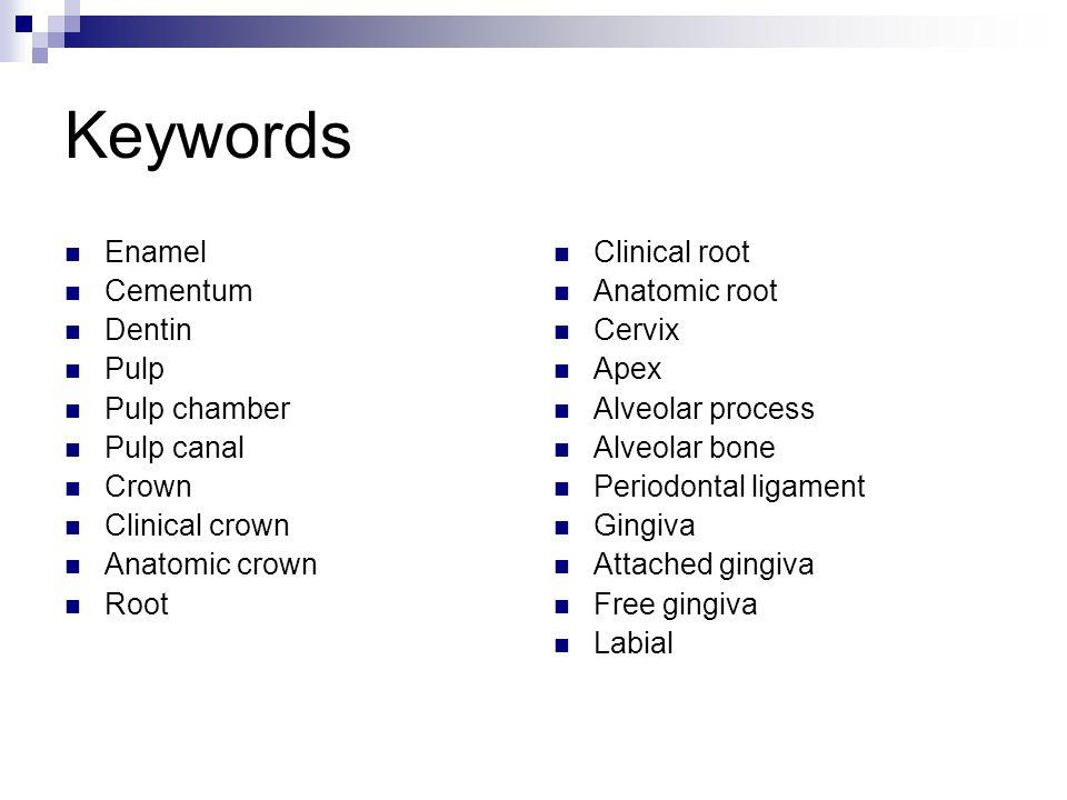 Keywords Enamel Cementum Dentin Pulp Pulp chamber Pulp canal Crown Clinical crown Anatomic crown Root Clinical root Anatomic root Cervix Apex Alveolar