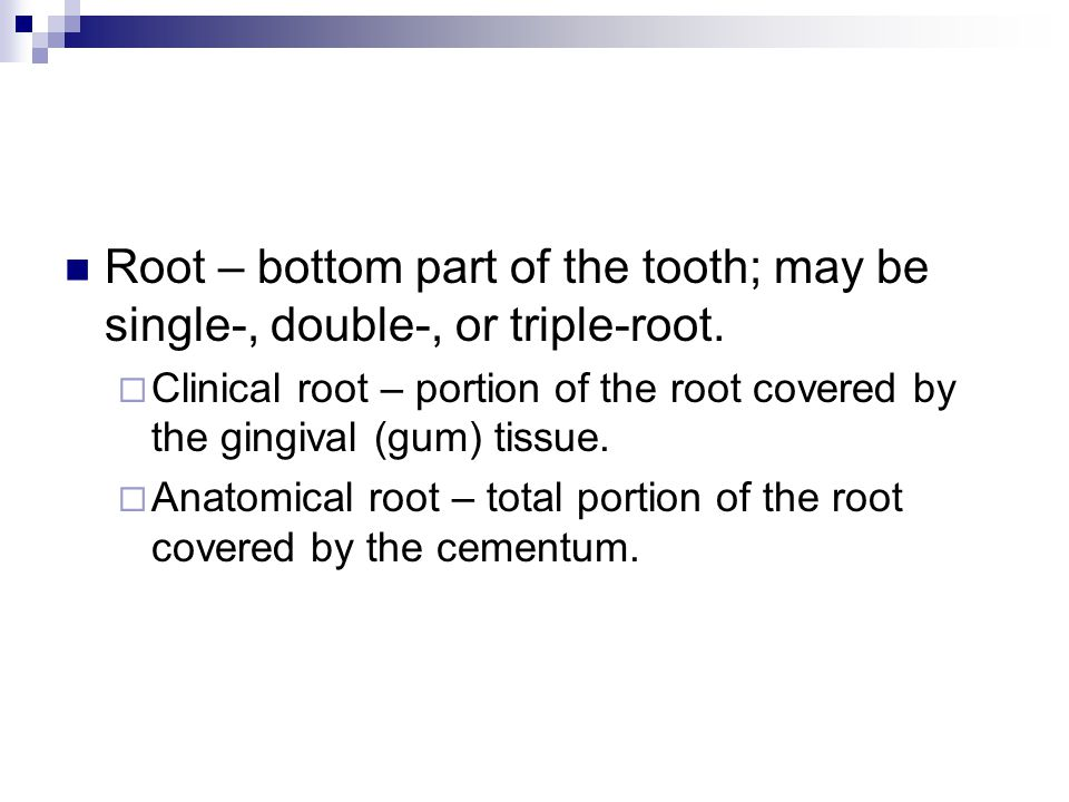 Proximal – side wall of tooth which meet with or touches the side wall of another tooth.