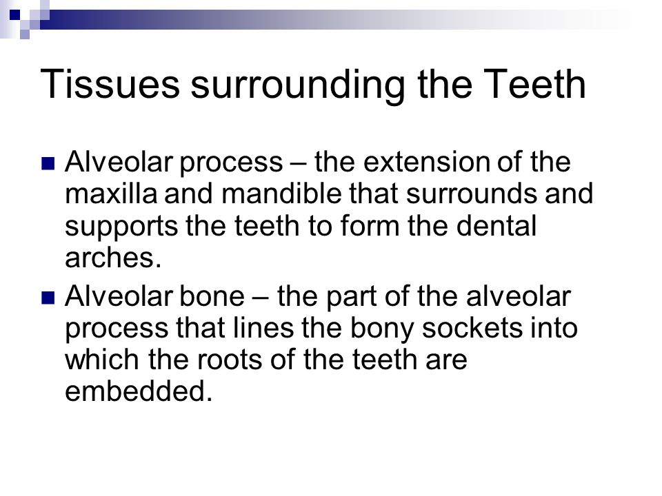 Tissues surrounding the Teeth Alveolar process – the extension of the maxilla and mandible that surrounds and supports the teeth to form the dental ar