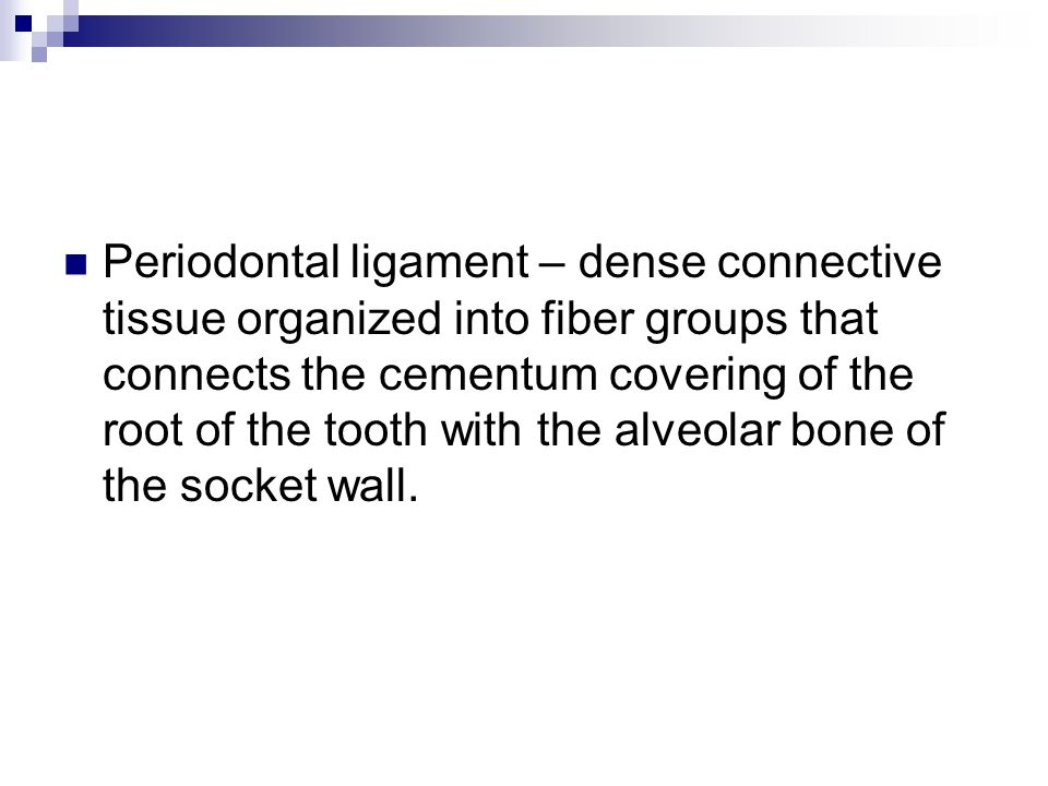 Periodontal ligament – dense connective tissue organized into fiber groups that connects the cementum covering of the root of the tooth with the alveo