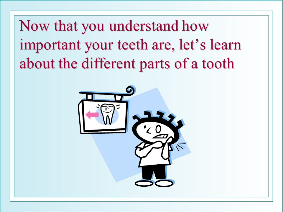 Now that you understand how important your teeth are, lets learn about the different parts of a tooth