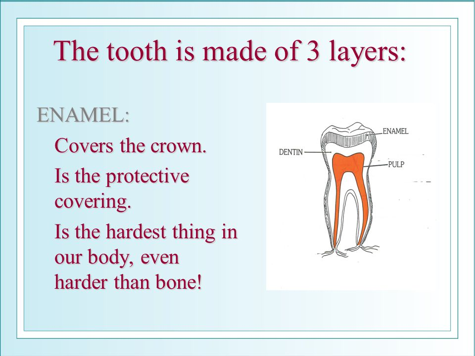 The tooth is made of 3 layers: ENAMEL: Covers the crown. Is the protective covering. Is the hardest thing in our body, even harder than bone!