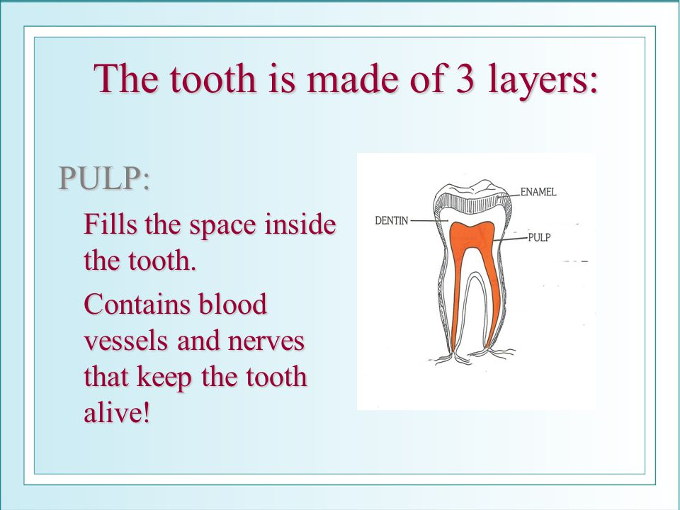 The tooth is made of 3 layers: PULP: Fills the space inside the tooth. Fills the space inside the tooth. Contains blood vessels and nerves that keep t