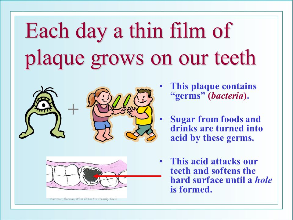 Each day a thin film of plaque grows on our teeth This plaque contains germs (bacteria).
