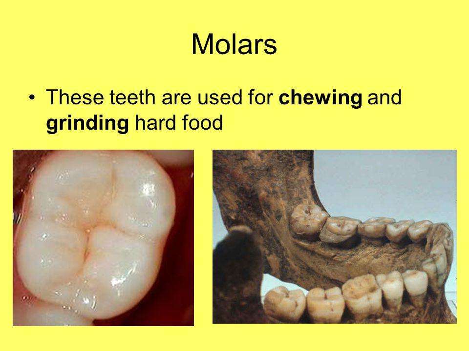 Teeth and Animals.