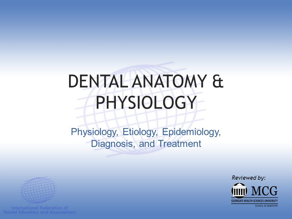 Anatomic Crown Anatomic Root Pulp Chamber The 3 parts of a tooth: Anatomic Crown Anatomic Root Pulp Chamber Dental Anatomy and Physiology
