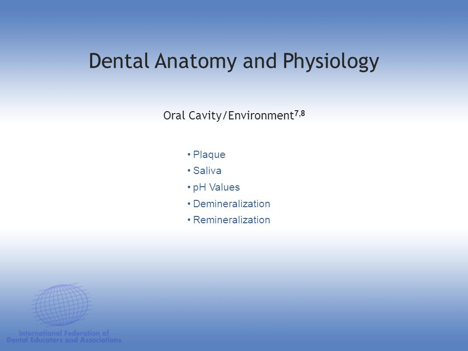 Plaque Saliva pH Values Demineralization Remineralization Oral Cavity/Environment 7,8 Dental Anatomy and Physiology