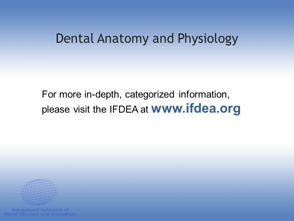 Dental Anatomy and Physiology For more in-depth, categorized information, please visit the IFDEA at www.ifdea.org
