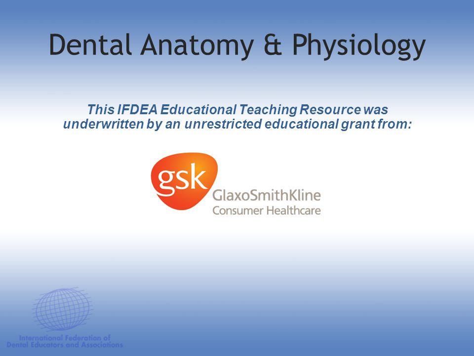 Dental Anatomy & Physiology This IFDEA Educational Teaching Resource was underwritten by an unrestricted educational grant from: