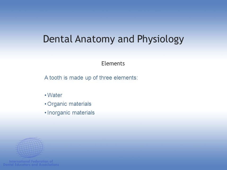 Dental Anatomy and Physiology Remineralization: 7,8 pH comes back to neutral (7) saliva-rich calcium and phosphates minerals penetrate the damaged enamel surface and repair it: –enamel pH is above 5.5 –dentin pH is above 6.5 Oral Cavity
