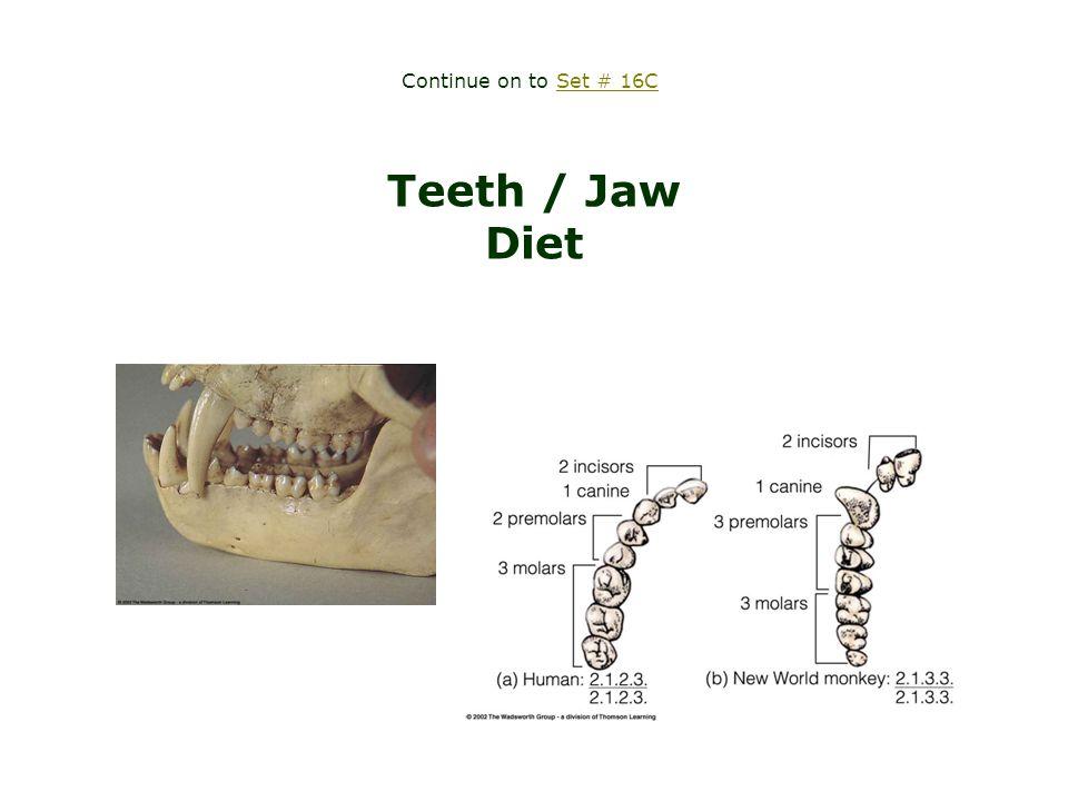the lower jaw = mandible related term: mandibular torus