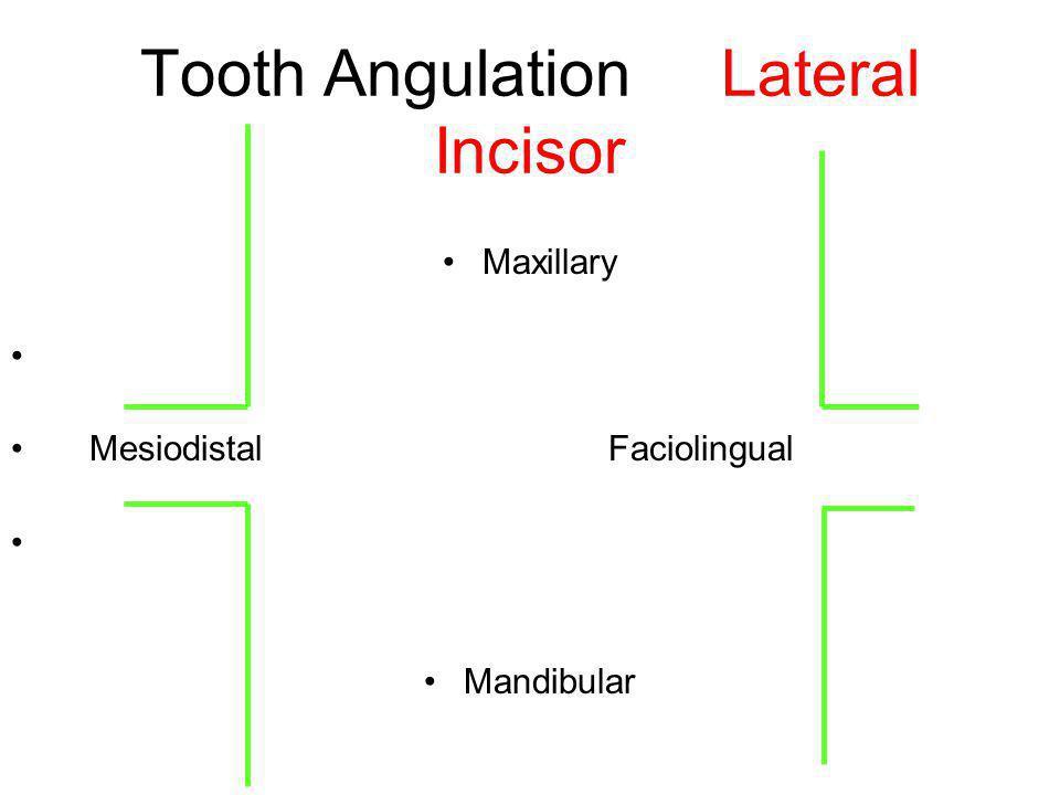 Tooth Angulation Lateral Incisor Maxillary Mesiodistal Faciolingual Mandibular