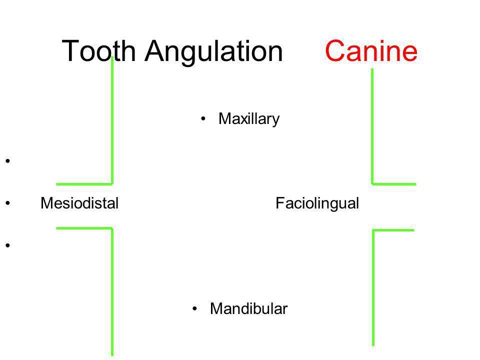 Tooth Angulation Canine Maxillary Mesiodistal Faciolingual Mandibular